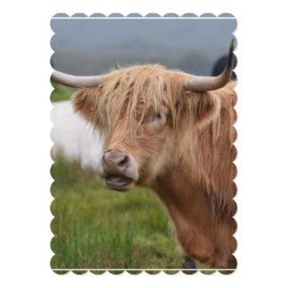 Pasto de la vaca de la montaña invitación