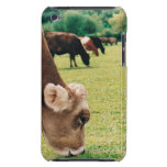 Pasto de la vaca del jersey iPod touch cárcasas