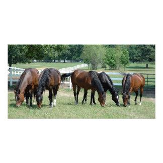 Pasto de los caballos cuartos tarjeta fotografica