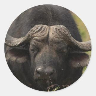 Pasto de los pegatinas del búfalo de agua pegatina redonda
