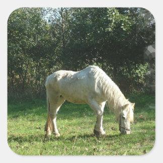 Pasto de los pegatinas del caballo blanco calcomanía cuadrada