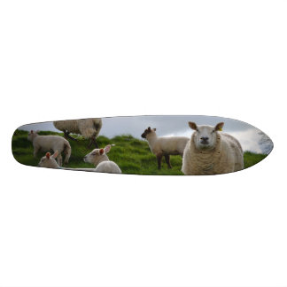 Pasto de ovejas patin personalizado