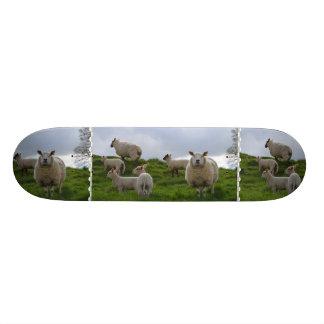 Pasto de ovejas tabla de skate