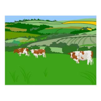 Pasto de vacas postales