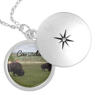 Pasto del bisonte de madera; Recuerdo del Collar Redondo