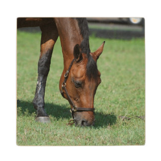Pasto del caballo cuarto posavasos de madera