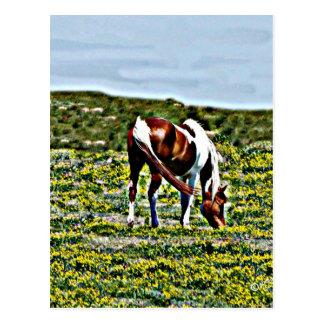 Pasto del caballo de la pintura con las flores postal