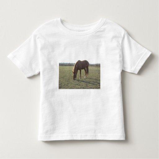 Pasto del caballo del color de la castaña camisas