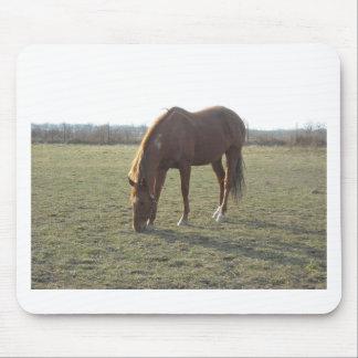 Pasto del caballo del color de la castaña tapetes de ratones
