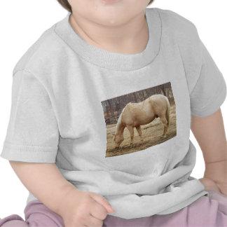 Pasto del caballo del Palomino Camisetas