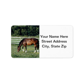Pasto del caballo etiquetas de dirección