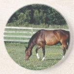 Pasto del caballo posavasos para bebidas