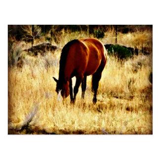 Pasto del caballo postales