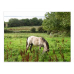 Pasto del caballo tarjeta postal