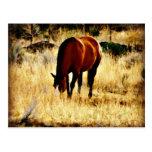 Pasto del caballo tarjetas postales
