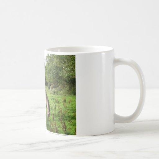 Pasto del caballo taza de café