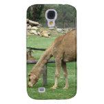 Pasto del camello