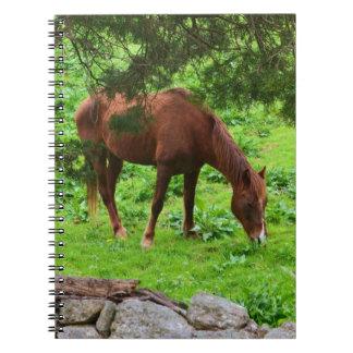 Pasto del cuaderno del caballo
