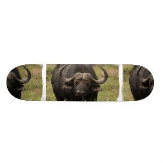 Pasto del monopatín del búfalo de agua