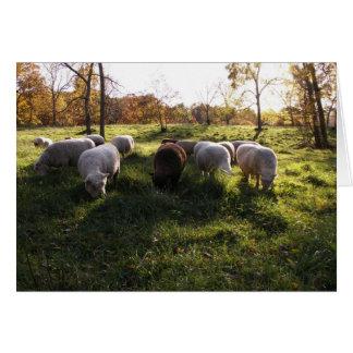 Pasto del otoño tarjeta