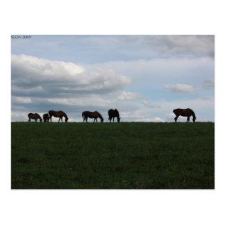 Pasto en la colina postal