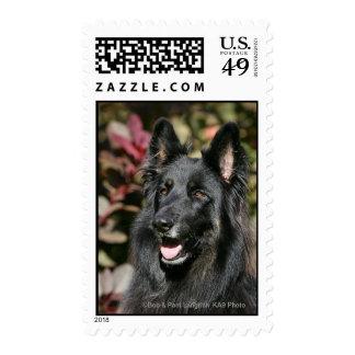 Pastor alemán de pelo largo negro sellos postales