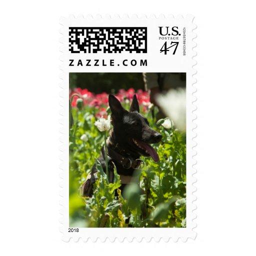 Pastor alemán en un campo timbre postal