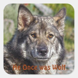 Pastor alemán noble Lobo-como actitud Pegatina Cuadrada