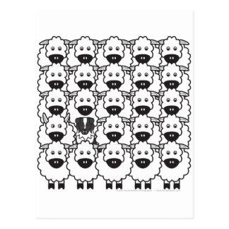 Pastor australiano en las ovejas postal