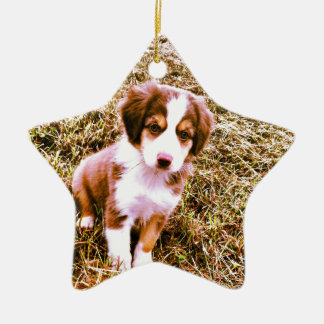 ¡Pastor australiano miniatura! ¡Mini perrito Ornamento De Navidad