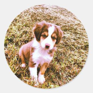 ¡Pastor australiano miniatura! ¡Mini perrito Pegatinas Redondas