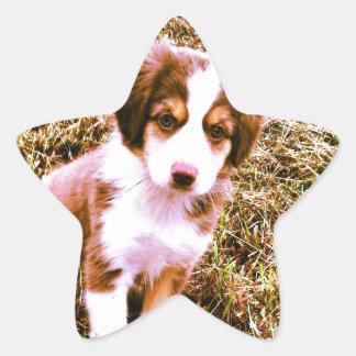 ¡Pastor australiano miniatura! ¡Mini perrito Calcomanía Cuadrada Personalizada