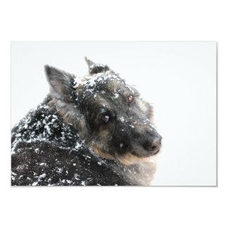 """Pastor belga en nieve invitación 3.5"""" x 5"""""""