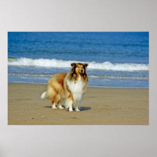 Pastor escocés - perro a la playa de arena, mar, impresiones