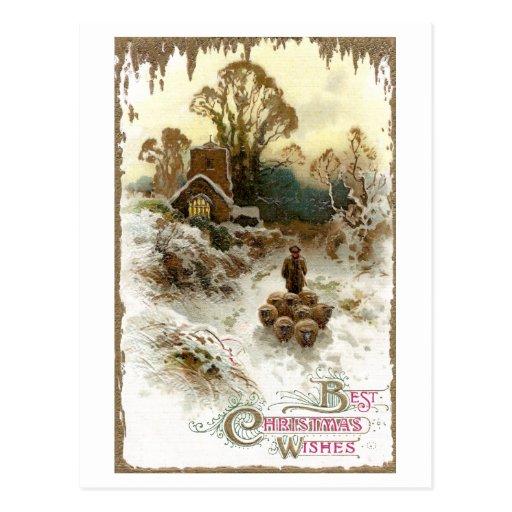 Pastor que reúne navidad del vintage de las ovejas tarjetas postales