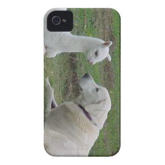 Pastor y alpaca de Anatolia Cria Case-Mate iPhone 4 Protectores