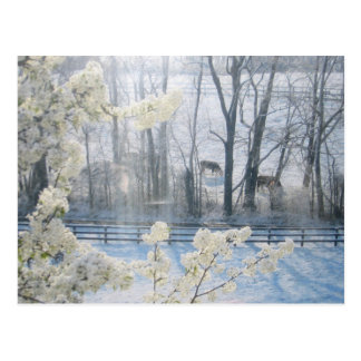 Pastoral Nature Scenery in Winter Postcards