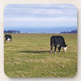 Pastoral scene of cows in field overlooking beverage coaster