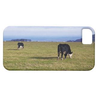 Pastoral scene of cows in field overlooking iPhone SE/5/5s case