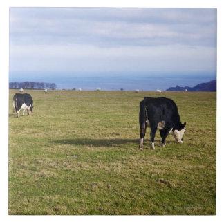 Pastoral scene of cows in field overlooking ceramic tiles