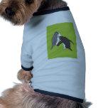 Pastos verde y brillante ropa perro