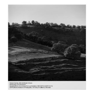 Pasture Scene by Ansel Adams Poster