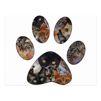 Pata de los gatos postal