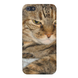 Pata del gato iPhone 5 fundas