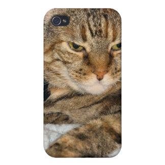 Pata del gato iPhone 4 protectores