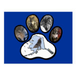 Pata del lobo de Alaska Postal