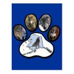 Pata del lobo de Alaska Tarjetas Postales