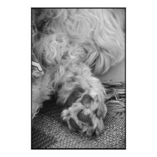 Pata del perrito cojinete