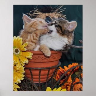 Pata en la boca, gato lindo del gatito que juega c impresiones