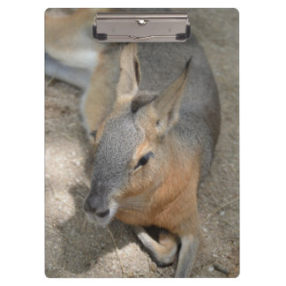 patagonian cavy animal resting animal clipboard